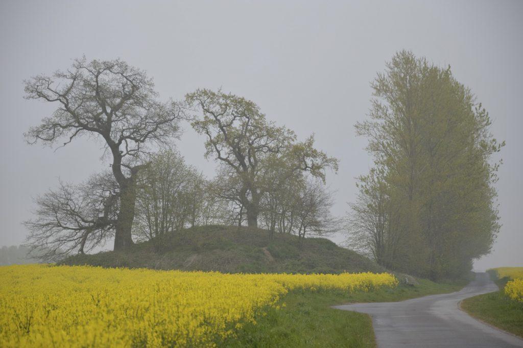 Landschaft und Rapsfeld in Silmenitz
